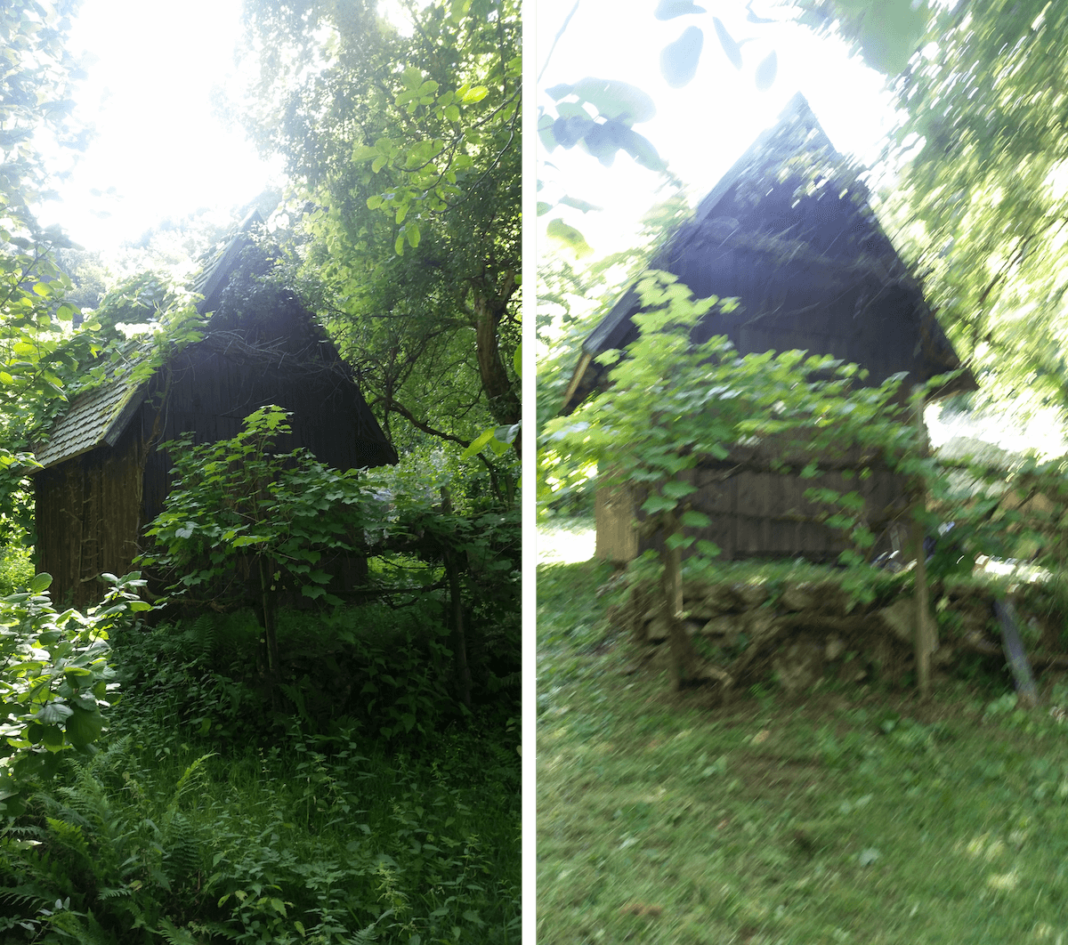 Entwilderung von Grundstück und Garten - vorher und nachher