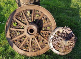 Wagenrad bepflanzt